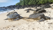 Small-Group Oahu Eco-Tour Including Waimea Valley Hike and Turtle Beach, Oahu