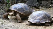 5-Night Galapagos Tour from Quito including 3-Night Yacht Cruise on the 'Queen Beatritz', Quito