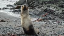 8-Day Antarctica Cruise with Round-Trip Flight from Punta Arenas, Antarctica