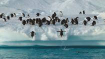 9-Day Antarctica Tour from Punta Arenas: Drake Passage, South Shetland and Antarctic Peninsula, ...