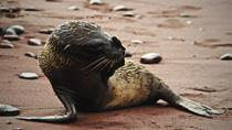 9-Night Galapagos Tour from Quito: San Cristobal, Isabela, Florena and Santa Cruz Island, Quito