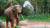 2-Night Chiang Mai Tour Including Elephant Nature Park, Chiang Mai, Multi-day Tours