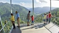 MaMu, Misty Mountains and Wooroonooran National Park Full-Day Tour, Cairns & the Tropical ...
