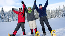 Dog Sledding and Snowshoeing Winter Adventure from Anchorage, Anchorage, Port Transfers
