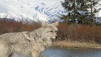 Turnagain Arm and Alaska Wildlife Tour from Anchorage, Anchorage, Half-day Tours