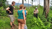 Opium Trail Trek Including Wat Phra That Doi Suthep and Hmong Village Tour, Chiang Mai, Private Day...