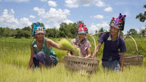 Private Tour: Hill Tribe Villages and Tea Plantation from Chiang Rai, Chiang Rai, Plantation Tours