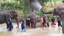Tong Bai Foundation Elephant Tour from Chiang Mai, Chiang Mai, Day Trips