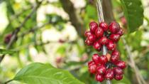 Adjuntas Coffee Plantation Day Trip from San Juan, San Juan, Food Tours