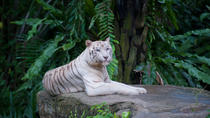 Singapore Zoo, Night Safari or River Safari Admission Ticket with Round-Trip Transfer, Singapore, ...