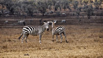 Hell's Gate National Park Walking Tour with Elsamere Conservation Park Visit from Nairobi, Nairobi, ...