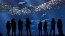 Monterey Bay Aquarium Admission, Monterey & Carmel, Attraction Tickets