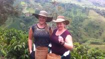 Medellin City and Coffee Region Tour, Medellín, Day Trips
