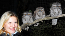 Abendtour durch den Moonlit Sanctuary Wildlife Conservation Park, Melbourne, Night Tours