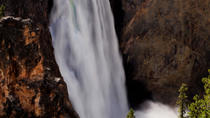 Yellowstone National Park Tour from Jackson, Jackson Hole, Eco Tours