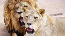 "Lion Habitat Ranch: Normaler Eintritt mit optionaler ""Hinter-den-Kulissen""-Tour, Las Vegas, ..."