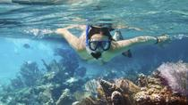 Cozumel Snorkeling Tour: Palancar, Columbia and Cielo Reefs, Cozumel, Snorkeling