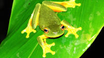 Atherton Tablelands Rainforest Wildlife Tour by Night, Cairns & the Tropical North, Nature & ...