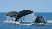 Grand Turk Shore Excursion: Whale Watching Adventure, Grand Turk, Ports of Call Tours