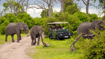 Chobe National Park Day Trip: Game Drive and River Cruise, Victoria Falls, null