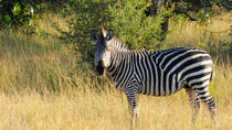 Game Drive in Stanley and Livingstone Private Reserve with Transport from Victoria Falls Town, ...