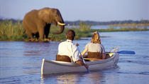 Kayak Safari on the Zambezi River with Transport from Livingstone, Livingstone, Nature & Wildlife