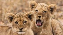15-Day South African Highlights Tour from Johannesburg, Johannesburg, Multi-day Tours
