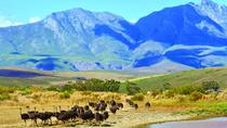 4-Day Guided Tour of the Garden Route from Cape Town, Cape Town, Multi-day Tours