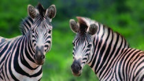 Hluhluwe Umfolozi Park Day Trip from Durban, Durban, Day Trips