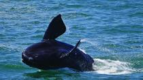 Whales and Wine Guided Day Tour from Cape Town, Cape Town, Day Trips