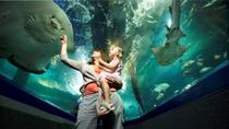 Sunshine Coast UnderWater World Entrance Ticket, Noosa & Sunshine Coast
