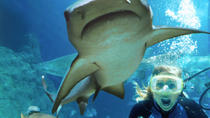 Sunshine Coast UnderWater World Entrance Ticket with Shark Dive Xtreme, Noosa & Sunshine Coast