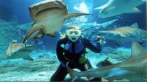 Sunshine Coast Underwater World SEA LIFE Aquarium Entrance Ticket with Shark Dive Xtreme, Noosa ...