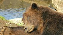 Sitka Sightseeing Tour including Fortress of the Bear, Sitka, Half-day Tours