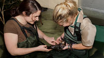 Meet a Platypus at Healesville Sanctuary, Yarra Valley, Zoo Tickets & Passes