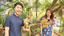Melbourne Zoo Year of the Monkey Experience, Melbourne, Zoo Tickets & Passes