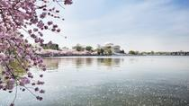 Cherry Blossom Riverboat Cruise on the Potomac, Washington DC