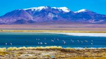 Atacama Salt Flat Day Trip from San Pedro de Atacama including Los Flamencos National Reserve and ...