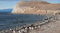 Magdalena Island Penguin Tour by Boat from Punta Arenas, Punta Arenas