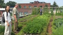 Montreal Urban Agriculture and Sustainable Food Tour by Bike, Montreal, Food Tours