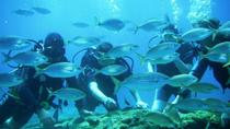 Rhodes Scuba Diving Experience for Beginners, Rhodes, Scuba Diving