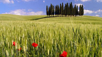 Montalcino, Orcia Valley, Pienza and Montepulciano: Wine and Cheese Tasting Guided Tour from...