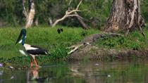 Corroboree Billabong Wetland Cruise from Darwin Including Lunch, Darwin