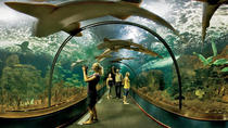 Loro Parque Admission Ticket with Round-Trip Transport and Optional Siam Park Upgrade, Tenerife, ...