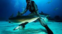 Grand Bahama Shark Dive, Freeport, Shark Diving
