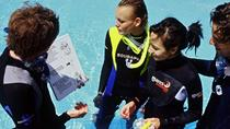 PADI Discover Scuba Diving in Freeport, Freeport, Ports of Call Tours