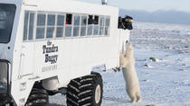 Tundra Buggy Adventure Day Tour from Churchill, Canada