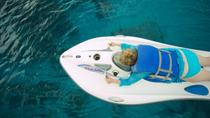 Reef Glider Experience in Grand Cayman, Cayman Islands, Other Water Sports