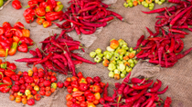 Zanzibar Food and Spices Tour Including Traditional Swahili Lunch, Middle East & Africa