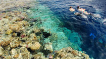 Egyptian Snorkel Day Trip from Sharm el Sheikh, Sharm el Sheikh, Snorkeling